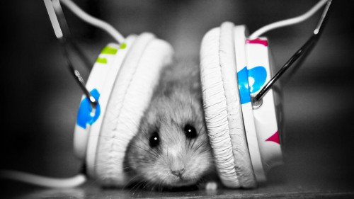 426216-club-music-animals-full-hd-wallpapers.jpg